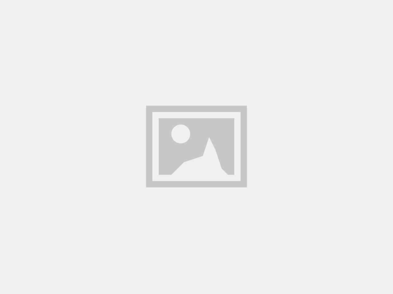 Stakeout 4 hundar [SCL]